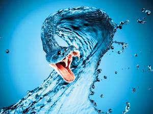 water-snake-year